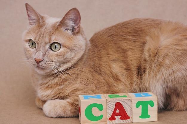 Słowo kot jest ułożone w drewnianych kostkach obok czerwonego kota. nauka angielskiego.