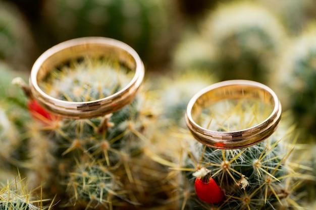 Ślubne złote pierścienie na kaktusa z pomarańczowymi owocami. miłość, koncepcja małżeństwa. widok z boku.