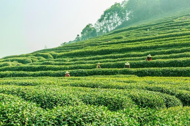 Słynny wiosenny zielony grunt rolniczy