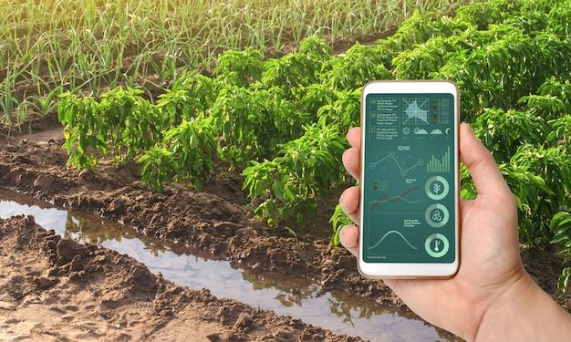 Smartfon z infografiką na tle plantacji papryki i cebuli pora