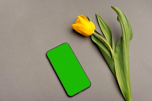 Smartfon z zielonym ekranem i żółtym tulipanem w pobliżu szarego tła