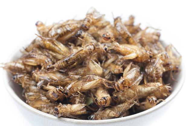 Smażone świerszcze to pożywienie po tajsku.