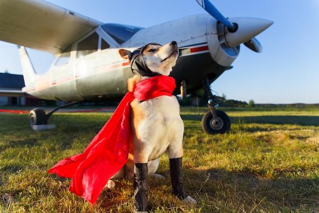 Śmieszna fotografia akita inu pies