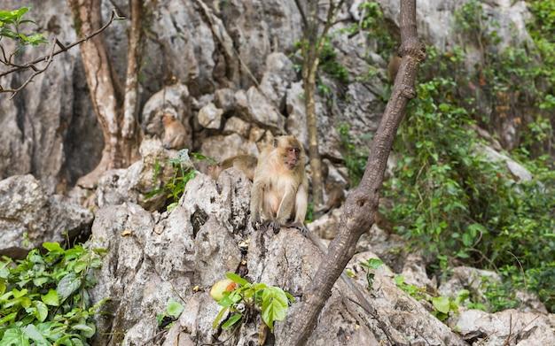 Śmieszna małpa w naturalnym lesie.