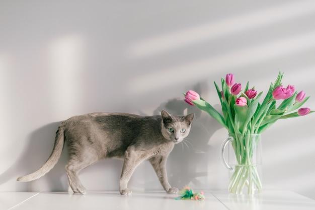 Śmieszna szarości figlarka pozuje na stole z bukietem tulipany w szklanej wazie.