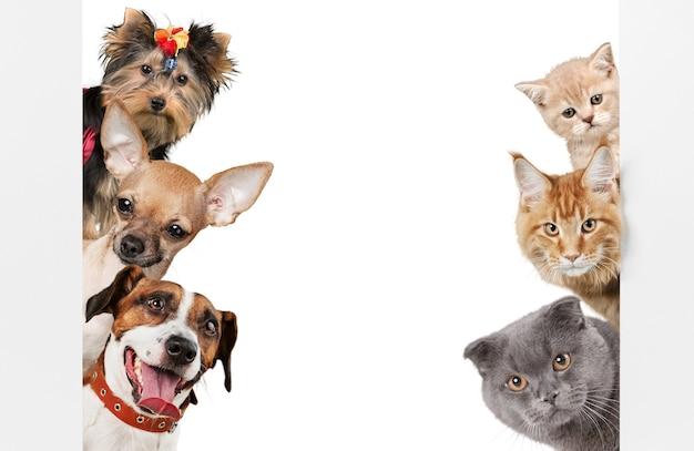 Śmieszne koty i psy