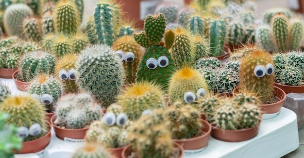 Śmieszne twarze kolczastych kaktusów w doniczkach z oczami
