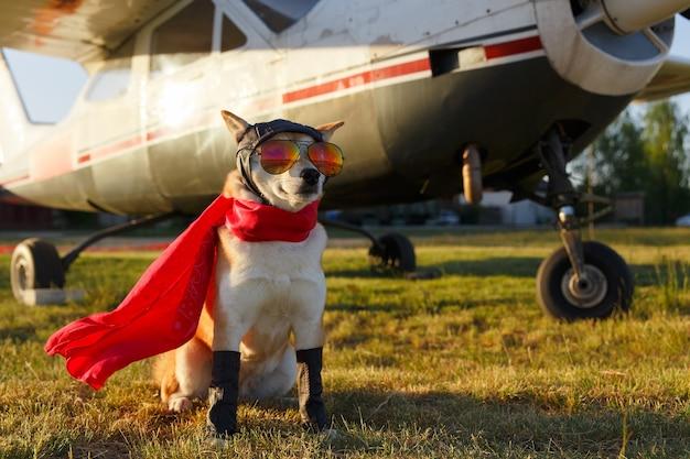 Śmieszne zdjęcie psa shiba inu w kombinezonie pilota na lotnisku