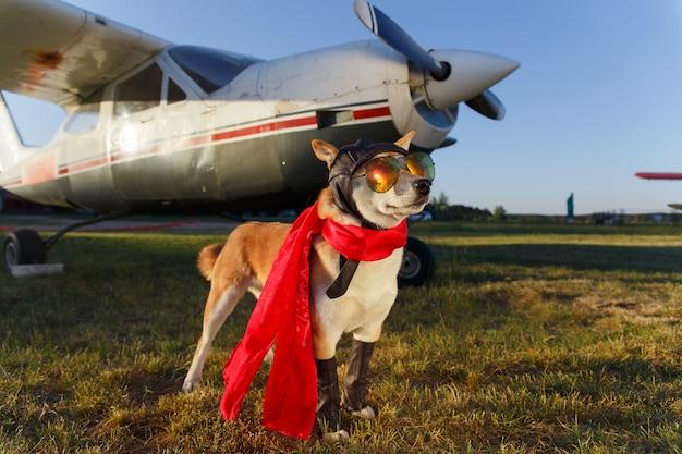 Śmieszne zdjęcie psa shiba inu