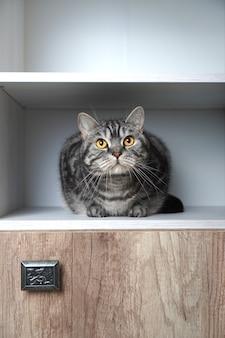 Śmieszne zwierzęta. śmieszny kot wygląda z szafy. koty uwielbiają chować się w ustronnych miejscach. znajdź koncepcję kota. fotografia pionowa.