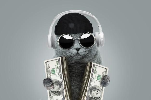 Śmieszny bogaty kot szefa w okularach przeciwsłonecznych, czapce i słuchawkach trzyma dolary w gotówce. pomysł na biznes i inwestycje. wygrywanie w kasynie