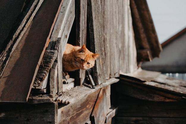 Śmieszny czerwony kot na zewnątrz