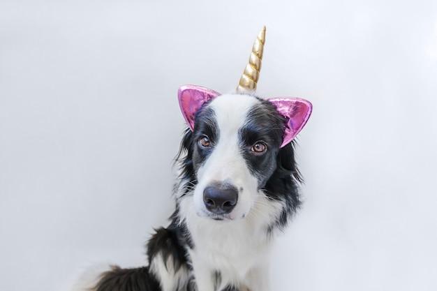 Śmieszny kawaii portreta szczeniaka psa border collie z jednorożec rogiem odizolowywającym