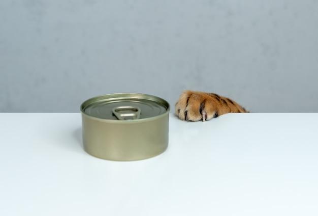 Śmieszny kot bengalski próbuje ukraść mokre jedzenie ze stołu