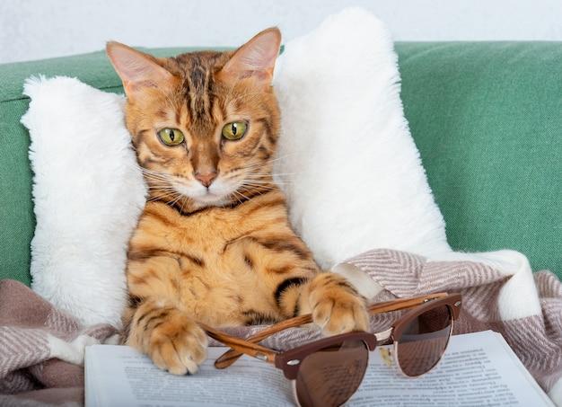 Śmieszny kot bengalski w okularach czyta książkę na kanapie w salonie.