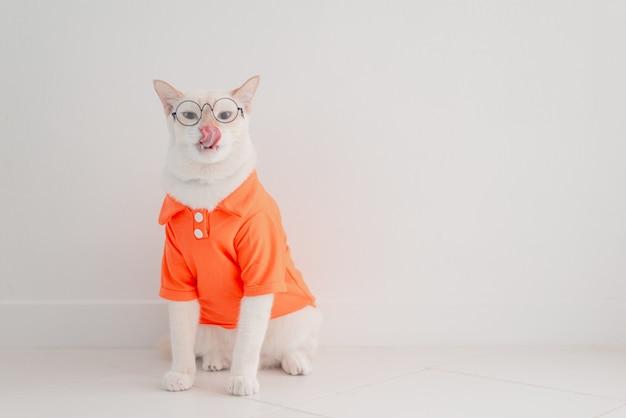 Śmieszny kot iść na wakacje, jest ubranym plażową koszula i kapelusz w lata pojęciu.