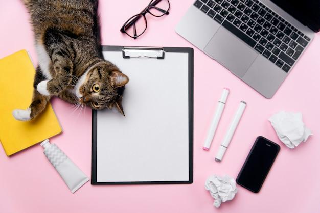 Śmieszny kot leżący na biurku i bawi się zmiętymi papierowymi kulkami.