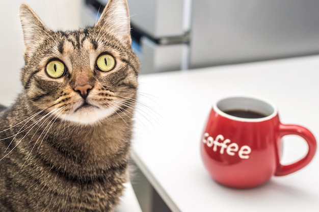 Śmieszny kot siedzi na krześle przy stole z dużą czerwoną filiżanką kawy.