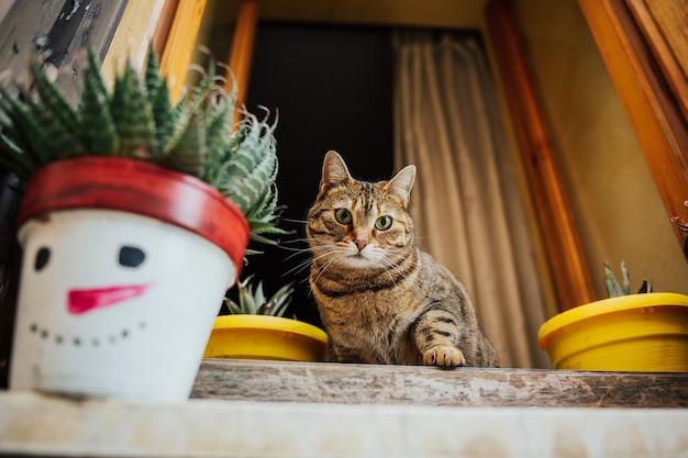 Śmieszny kot siedzi przy oknie starożytnego kamiennego domu.