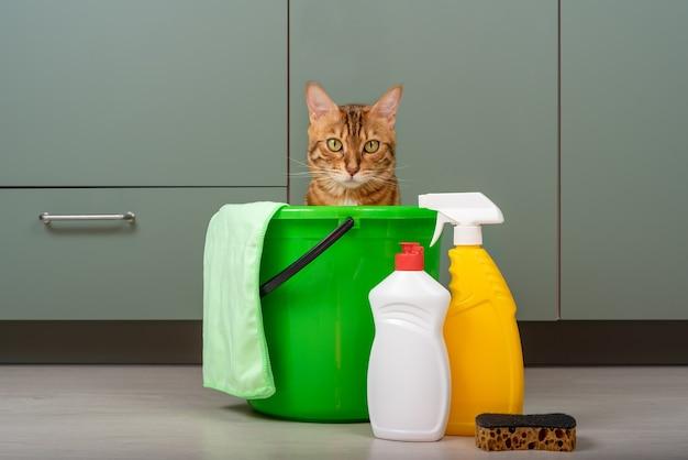 Śmieszny kot siedzi w wiadrze obok detergentów i szmaty. sprzątanie domu.