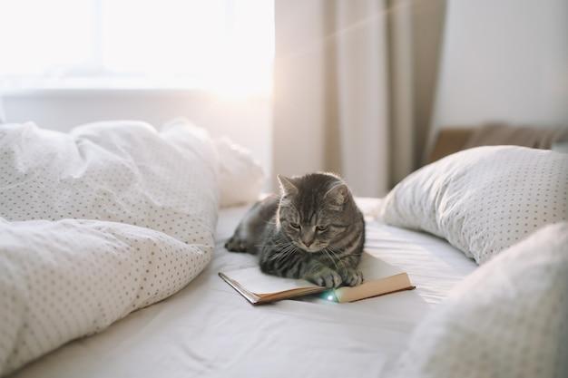 Śmieszny kot śpi na kocu w łóżku