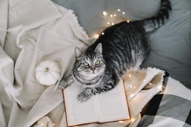 Śmieszny kot szkocki prosto leżący na kocu w łóżku w domu