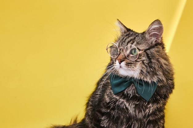 Śmieszny kot w muszce siedzi na żółtej powierzchni