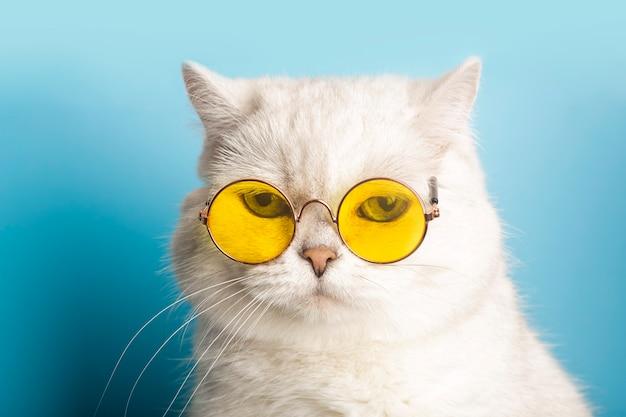 Śmieszny kot w okularach przeciwsłonecznych kot w okularach na jasnoniebieskim czystym słonecznym tle