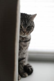 Śmieszny kot w przytulnym domowym wnętrzu