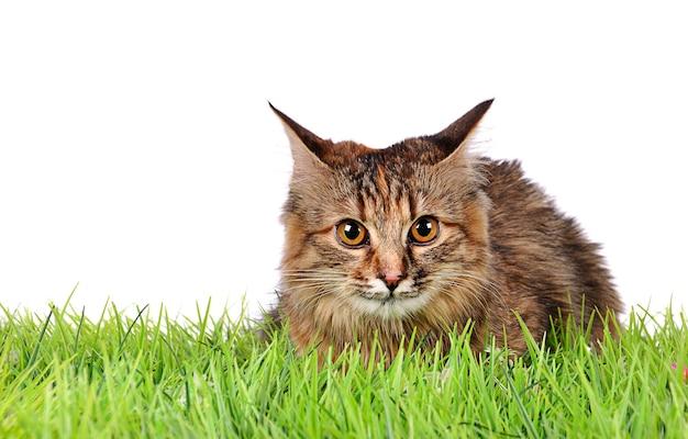 Śmieszny kotek kot na zielonej trawie