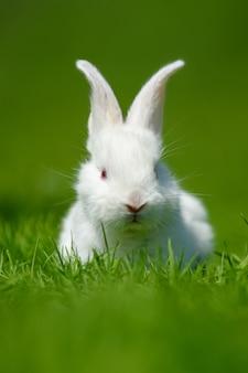 Śmieszny mały biały królik na wiosennej zielonej trawie