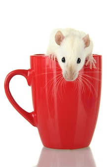 Śmieszny mały szczur w filiżance, na białym tle