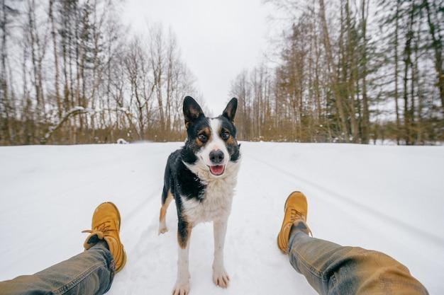 Śmieszny nieśmiały pies stojący na śnieżnej drodze zimą między nogami właściciela i patrząc na niego.