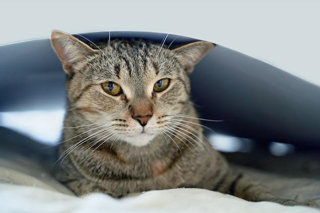 Śmieszny piękny śmieszny kot kłama na łóżku