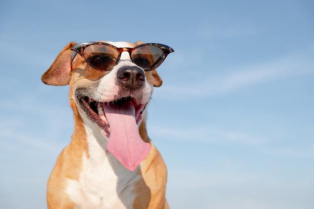Śmieszny pies w okularach przeciwsłonecznych outdoors w lecie.
