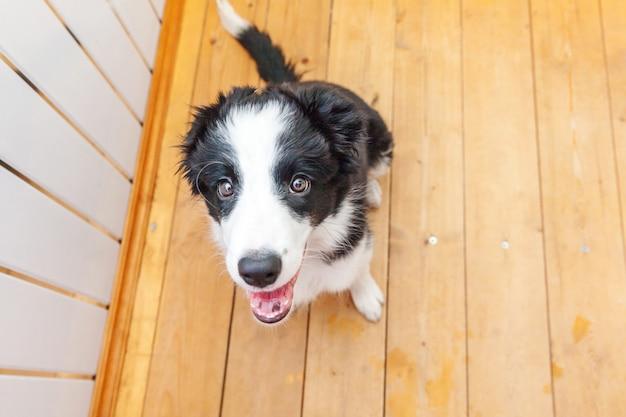 Śmieszny portret śliczny uśmiechnięty szczeniaka psa border collie w domu
