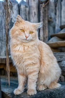 Śmieszny puszysty czerwony kot siedzi na ulicie