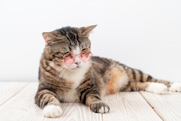 Śmieszny szary kot z modnymi okularami przeciwsłonecznymi