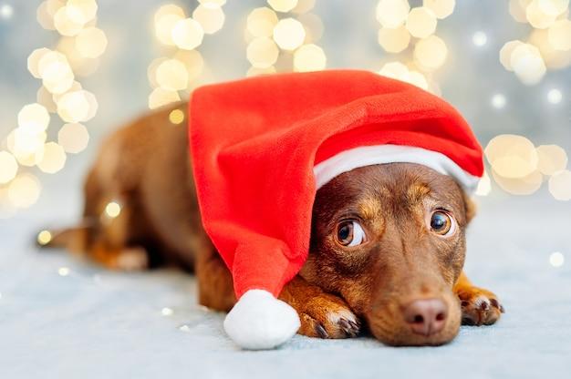 Śmieszny szczeniak w czerwonym santa hat