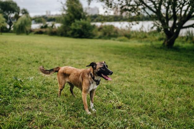 Śmieszny uśmiechnięty psi czekanie na trawie