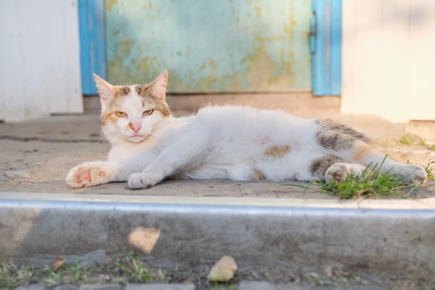 Śmieszny wiejski kot kłama blisko drzwi, plenerowy zmierzch, kota karmienia matka