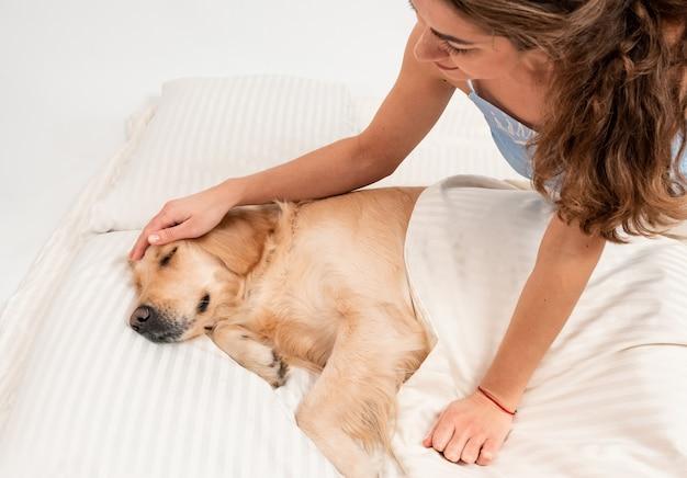 Smutna twarz psa golden retriever śpi na łóżku. pies okryty białym kocem.