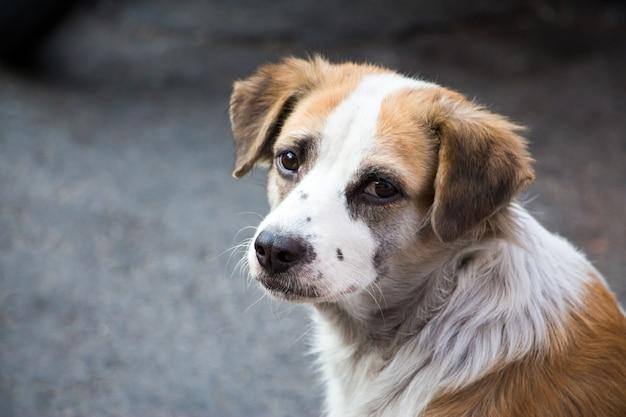 Smutno wyglądający pies uliczny