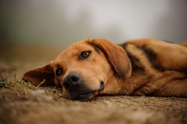 Smutny brown szczeniaka lying on the beach na ziemi