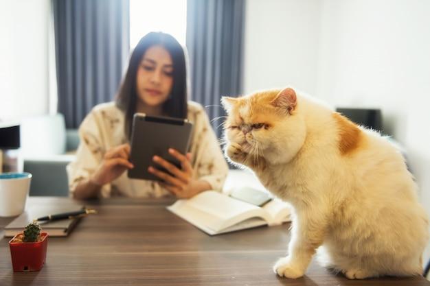 Smutny kot ignoruje właścicielka