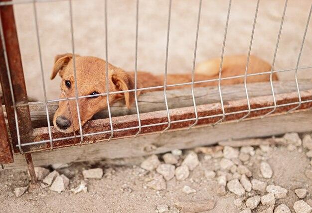 Smutny pies leżący w klatce w schronisku