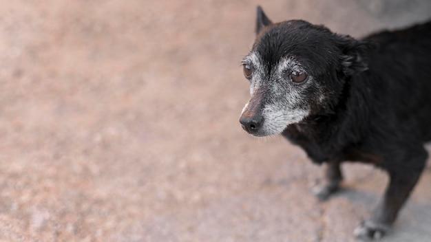 Smutny pies ratowniczy w ośrodku adopcyjnym z miejsca na kopię