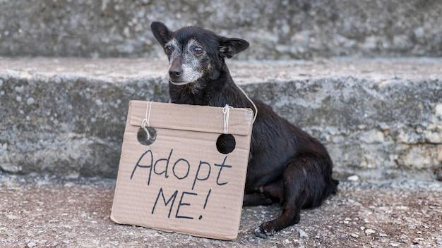 Smutny pies ratowniczy ze znakiem adoptuj mnie w schronisku