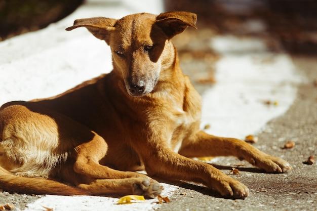 Smutny porzucony pies leżący na ziemi. śliczny bezdomny zwierzak o pięknych oczach. głodny zagubiony zwierzak na ulicy.