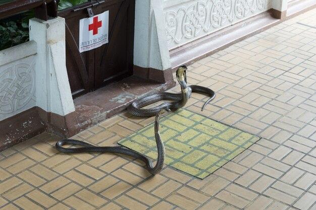 Snake show i pokazany turystom w serpentarium